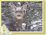 A baby deer during a winter snow storm of 2006